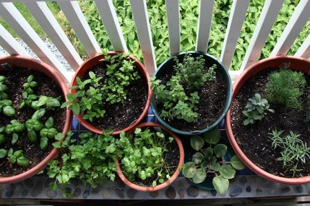 Herbs_08